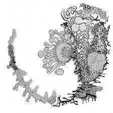 Synapsen 1