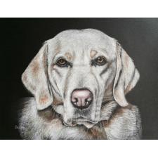 Labrador/Golden Retriever